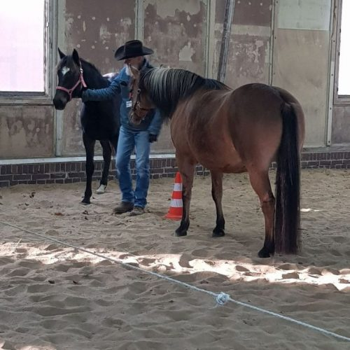 horsesense_coaching9