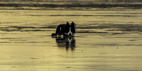 Hund im ablaufenden Wasser